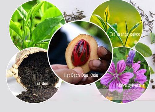 Thành phần trong trà thảo mộc cô đặc Herbalife Tea Concentrate