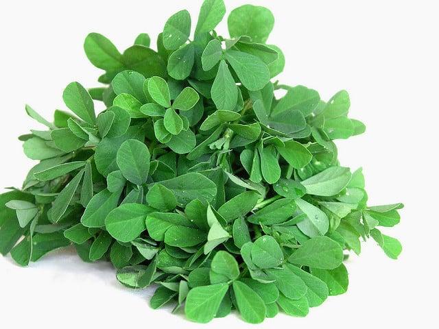 Fenugreek là loại thảo dược kích thích tuyến sữa, phát triển tuyến vú hiệu quả nhất