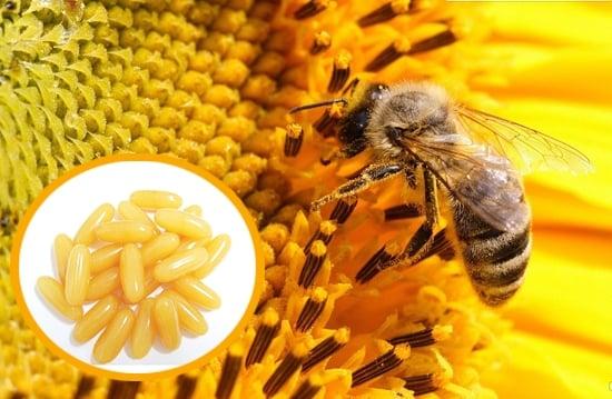 Kết quả hình ảnh cho sữa ong chúa dạng viên