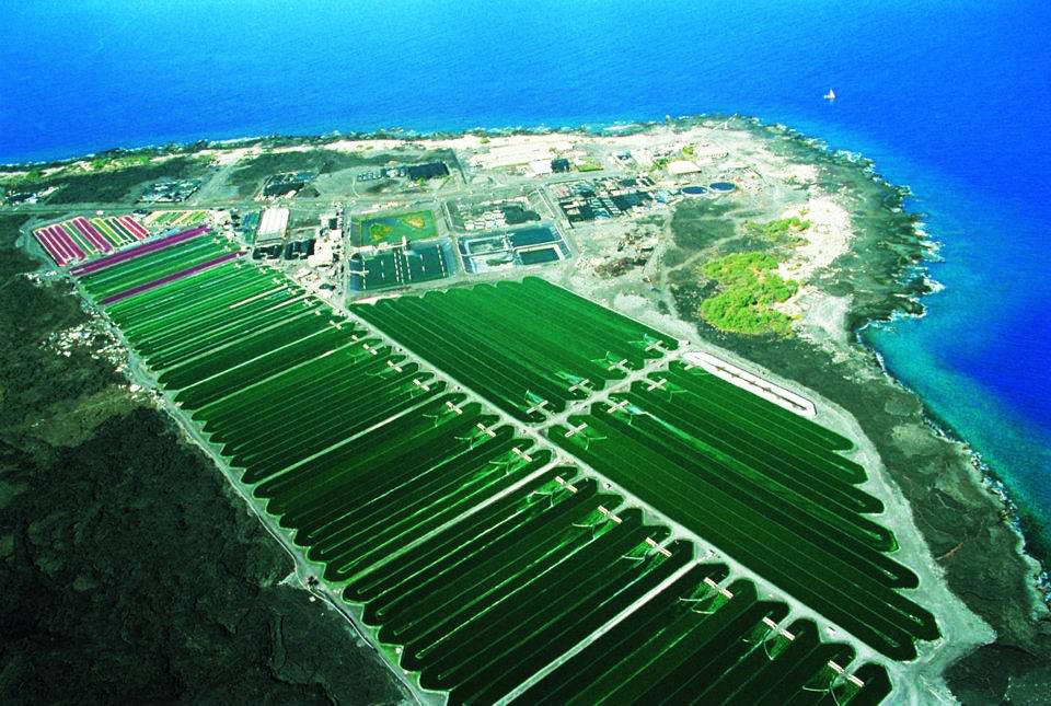 Nơi nuôi trồng tảo xanh Spirulina tại Nhật Bản