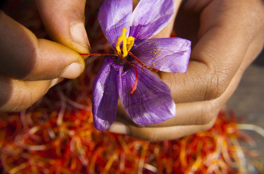 Nhụy Hoa Nghệ Tây Baby Saffron Ấn Độ 1g