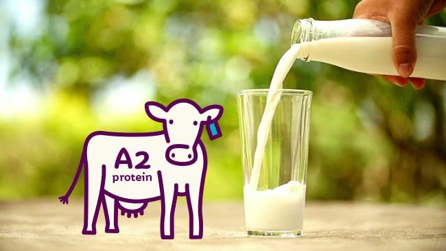 Cách pha sữa A2 của Úc đúng chuẩn