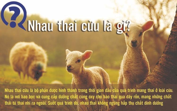 Top 25+ Viên Uống Nhau Thai Cừu Của Úc Mua Chính Hãng, Giá Tốt