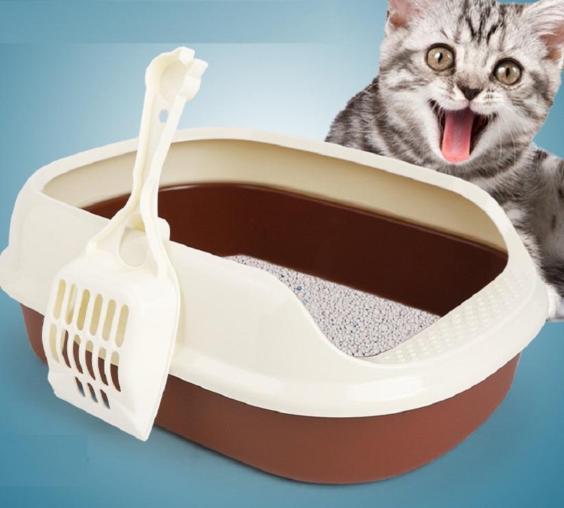 Sử dụng cát vệ sinh hạt trắng cho mèo