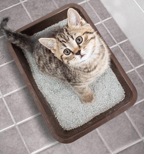 Cát vệ sinh Katz Comfort hỗ trợ chăm sóc hiệu quả cho không gian sống của mèo