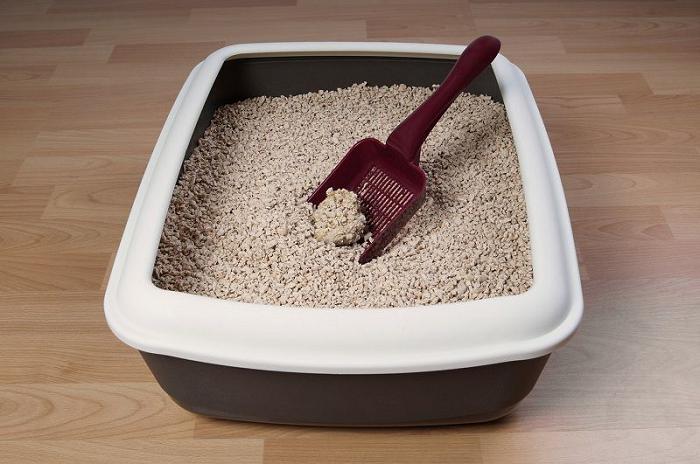 Sử dụng cát vệ sinh chăm só cho mèo