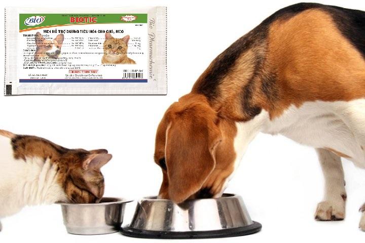 Cải thiện khả năng hấp thu dinh dưỡng ở chó mèo