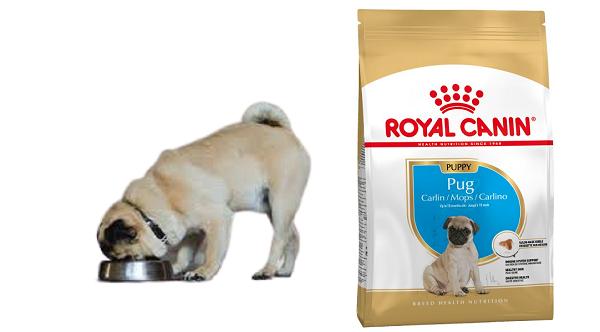 Tỷ lệ thức ăn hạt chó Royal Canin Pug Puppy phù hợp độ tuổi
