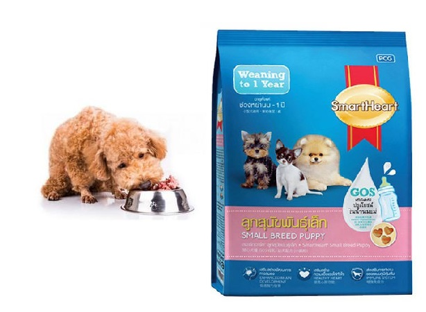 Thức ăn hạt hỗ trợ dinh dưỡng cần thiết cho chó