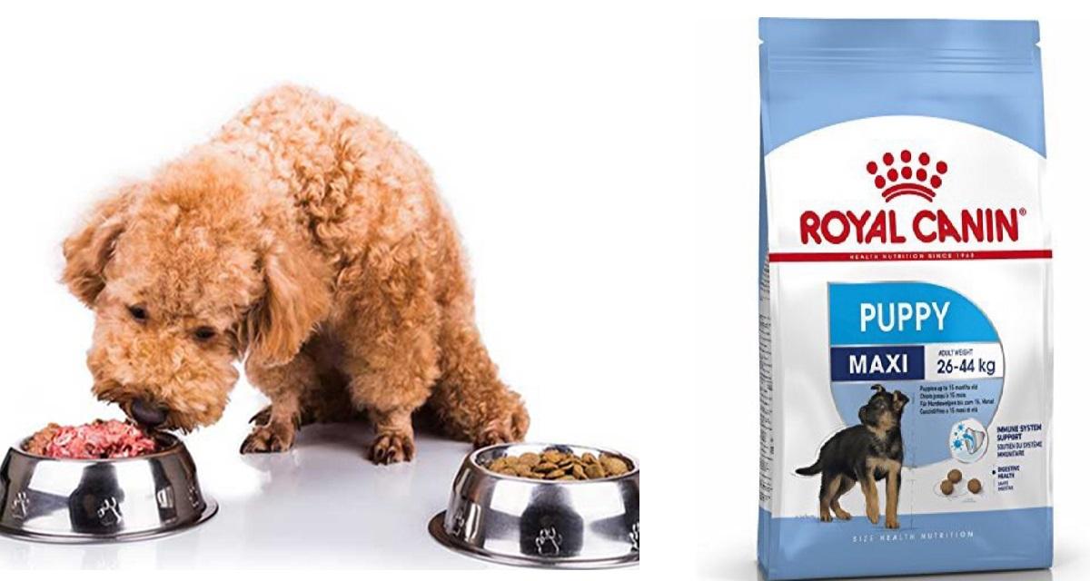Thức ăn hạt cho chó Royal Canin Maxi Puppy hỗ trợ tăng trưởng cân đối, đều đặn