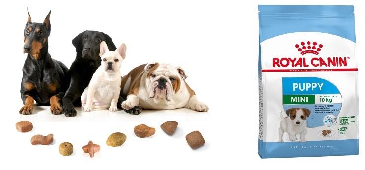 Thức ăn hạt cho chó kích thước nhỏ từ 2 -10 tháng tuổi