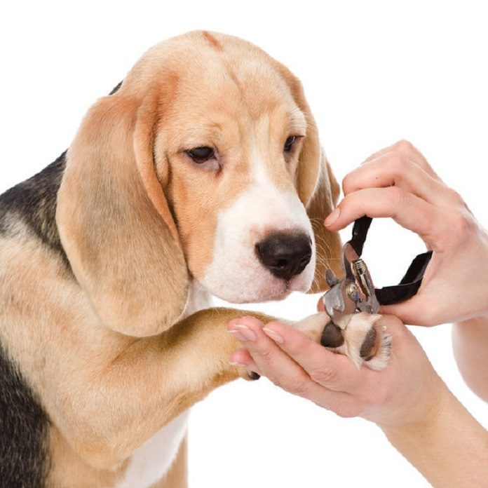 Bấm móng tại nhà đơn giản cho chó