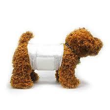 Sử dụng bỉm lót giữ vệ sinh cho chó