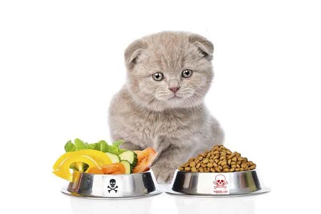Các loại thức ăn cho mèo