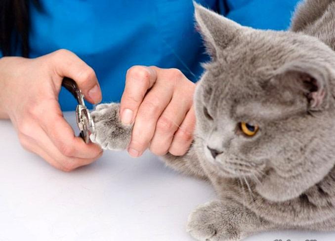Kìm bấm cho mèo tại nhà