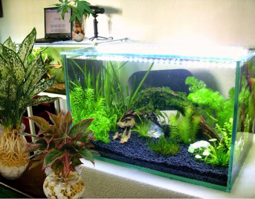 Phân nước Seachem Flourish Advance cho cây thủy sinh