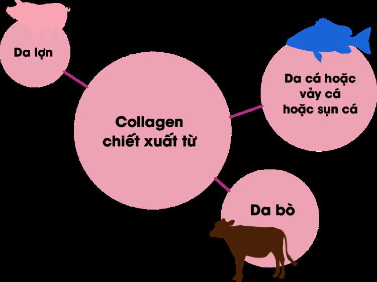 Ưu tiên các sản phẩm collagen từ da heo