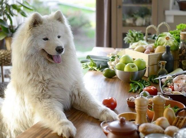 Chó Ăn Socola Được Không? Phải Làm Gì Khi Chó Lỡ Ăn Sô Cô La 6