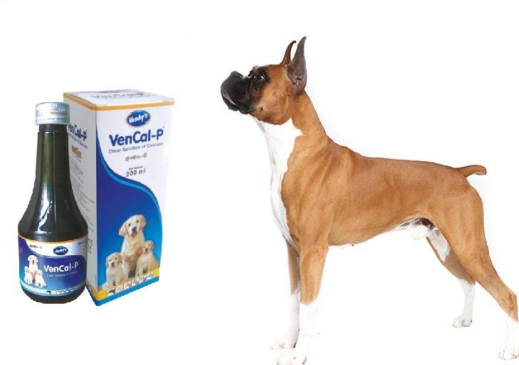 Nước uống bổ sung canxi, Phospho Vencal-P hỗ trợ cho chó mèo khỏe mạnh