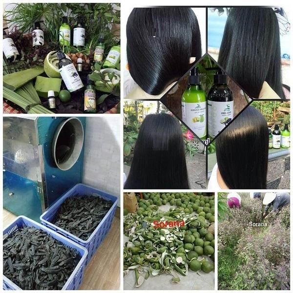 Dầu gội nước bồ kết vỏ bưởi Sora thành phần thảo dược, chăm sóc tóc mượt mà, hạn chế gẫy rụng