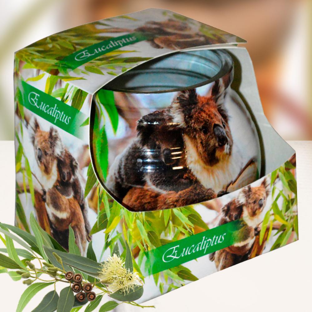 Ly nến thơm tinh dầu Admit 85g QT01883 hương bạch đàn 1
