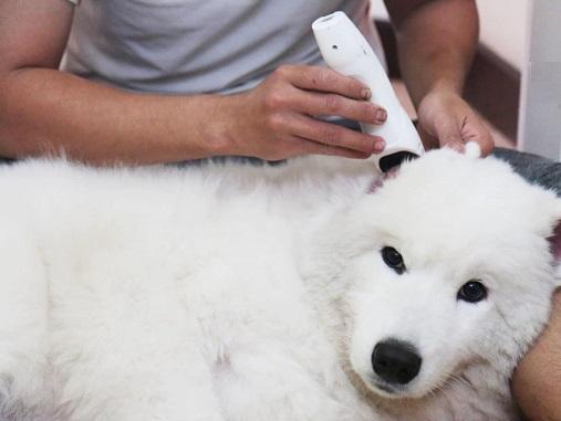 Voucher Cắt tỉa và tắm trọn gói cho chó mèo 10 đến 15kg 2