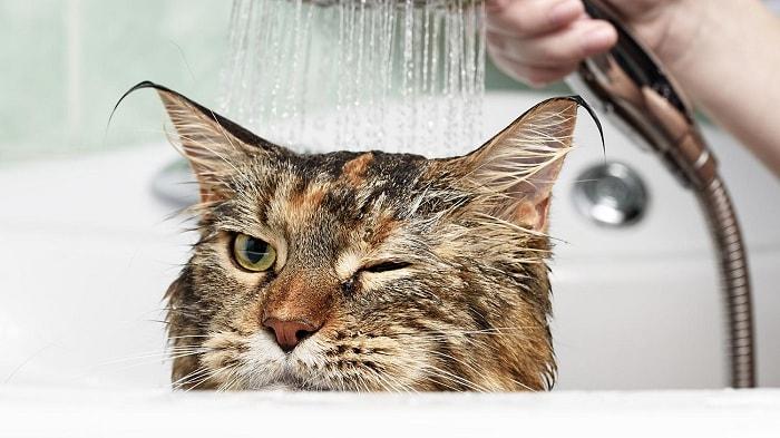 Voucher tắm vệ sinh trọn gói cho chó mèo lông ngắn 5 đến 7kg 1