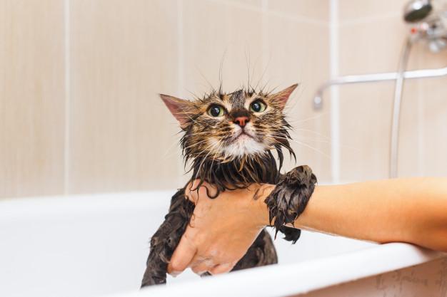 Voucher tắm và vệ sinh cho chó mèo lông ngắn dưới 2kg 2