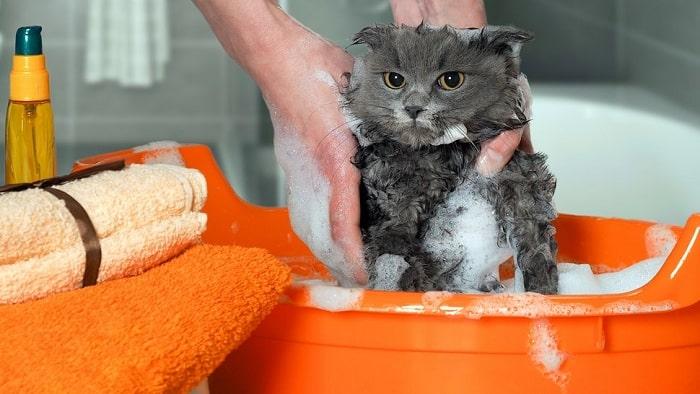 Voucher tắm và vệ sinh trọn gói cho chó mèo lông ngắn 2 – 3kg 1