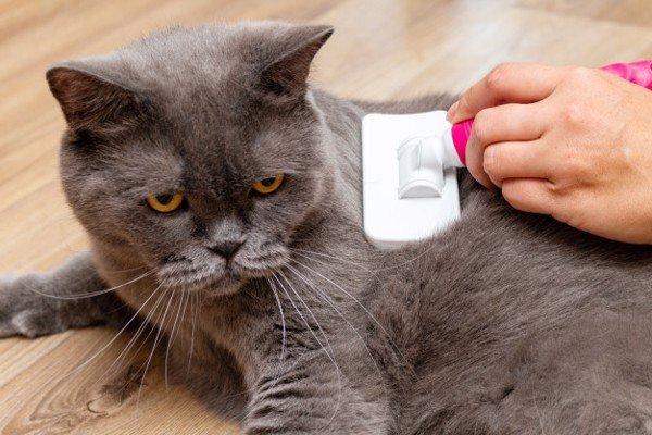Voucher tắm và vệ sinh trọn gói cho chó mèo lông ngắn 3 đến 5kg 2