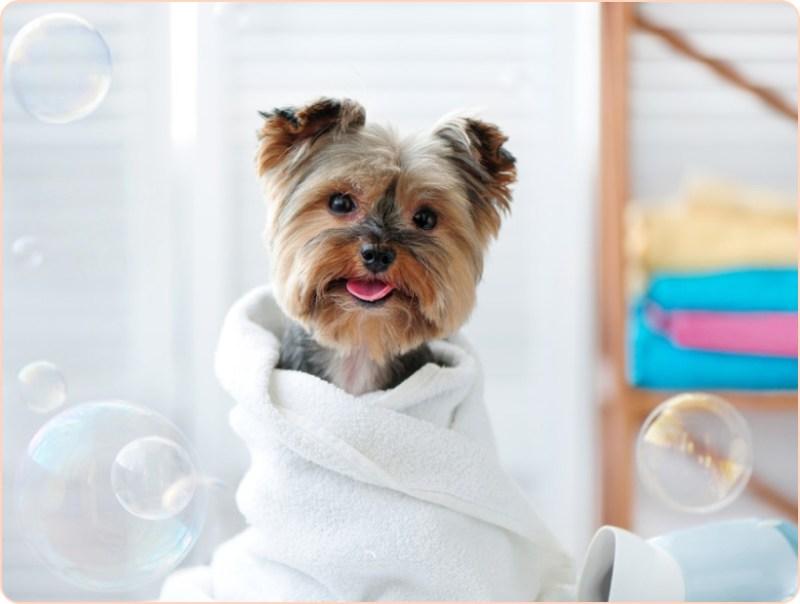 Voucher tắm, vệ sinh trọn gói chó mèo lông ngắn 10 đến 15kg 1