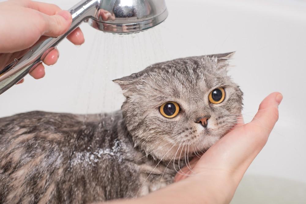 Voucher tắm và vệ sinh cho chó mèo lông ngắn 25kg đến 30kg 1