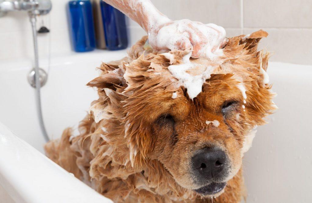 Voucher tắm và vệ sinh cho chó mèo lông ngắn 25kg đến 30kg 2