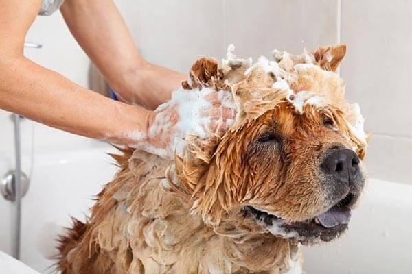 Voucher tắm, vệ sinh trọn gói chó mèo lông ngắn 15 đến 20kg 2