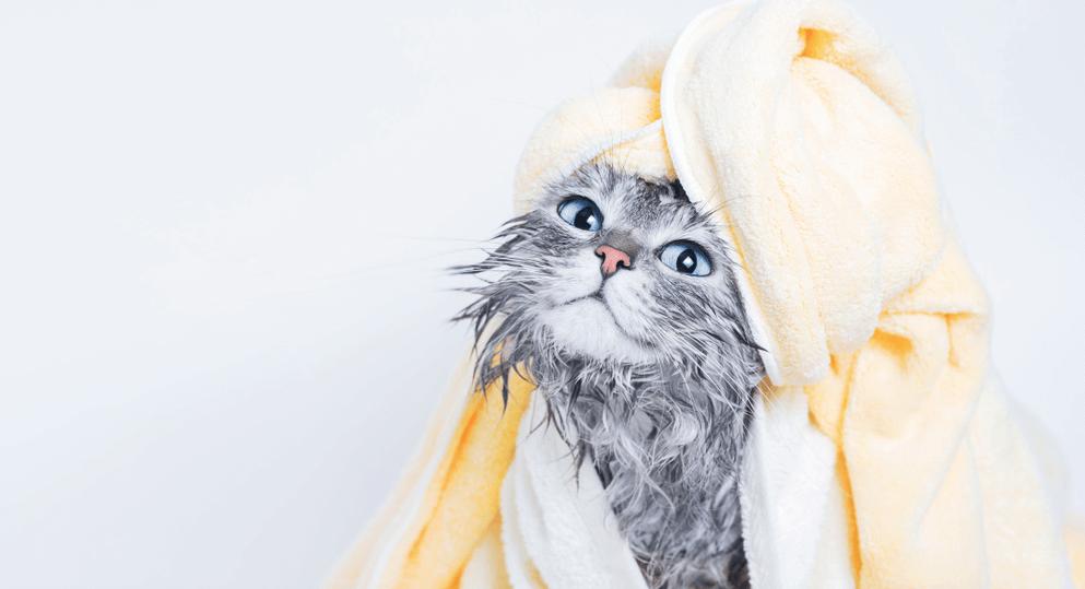 Voucher tắm và vệ sinh trọn gói cho chó mèo lông dài dưới 2kg 1