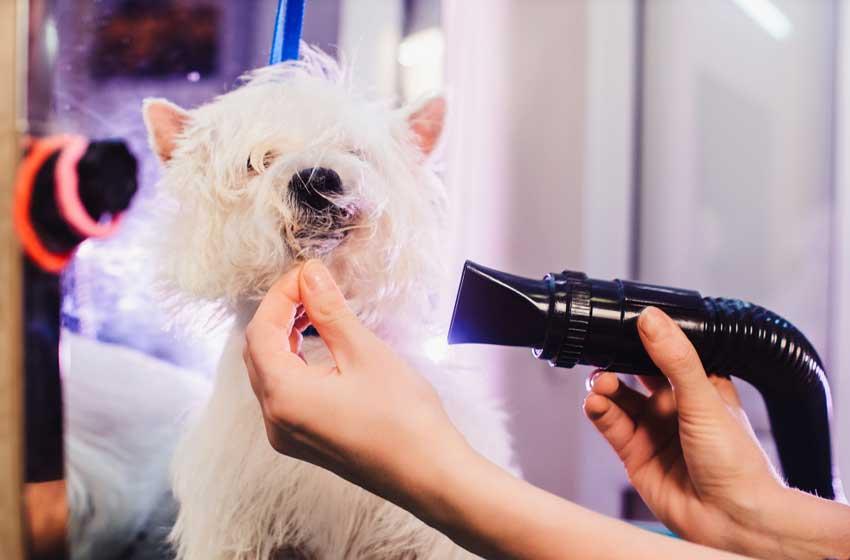 Voucher tắm vệ sinh trọn gói cho chó mèo lông dài từ 2kg đến 3kg 2