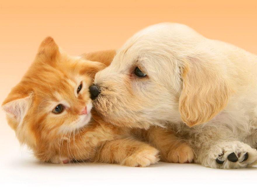 Voucher cắt tỉa và tắm trọn gói cho chó mèo từ 2 đến 3kg 3