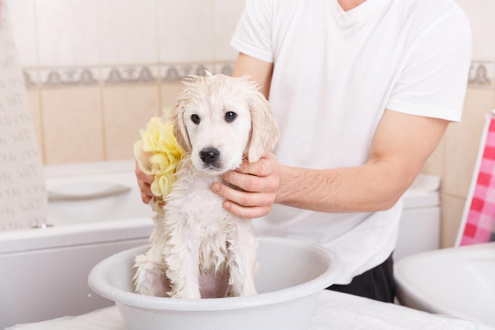 Voucher tắm vệ sinh trọn gói cho chó mèo lông dài 3kg đến 5kg 1