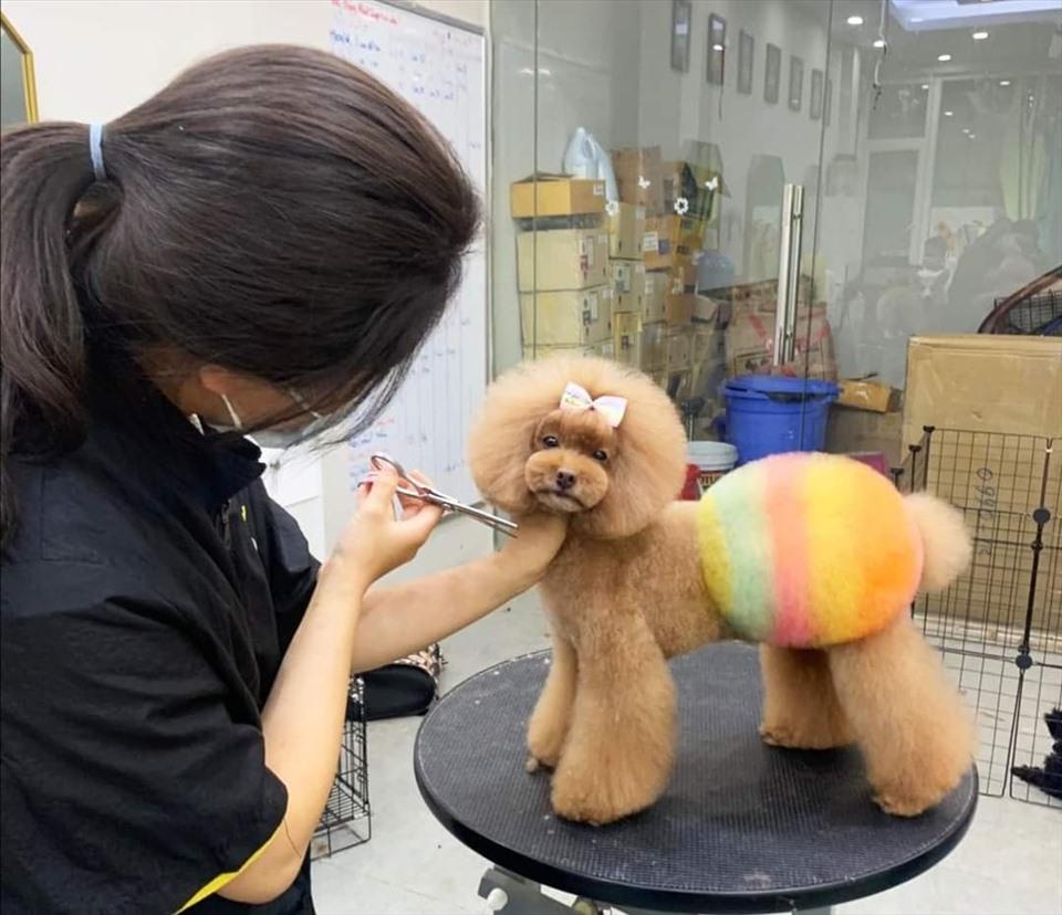 Voucher cắt tỉa và tắm trọn gói cho chó mèo 3 đến 5kg 2