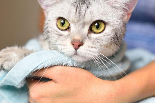Voucher tắm vệ sinh trọn gói cho chó mèo lông dài 5kg đến 7kg 2