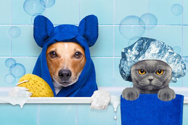 Voucher Cắt Tỉa Và Tắm Trọn Gói Cho Chó Mèo 5 đến 7kg 3