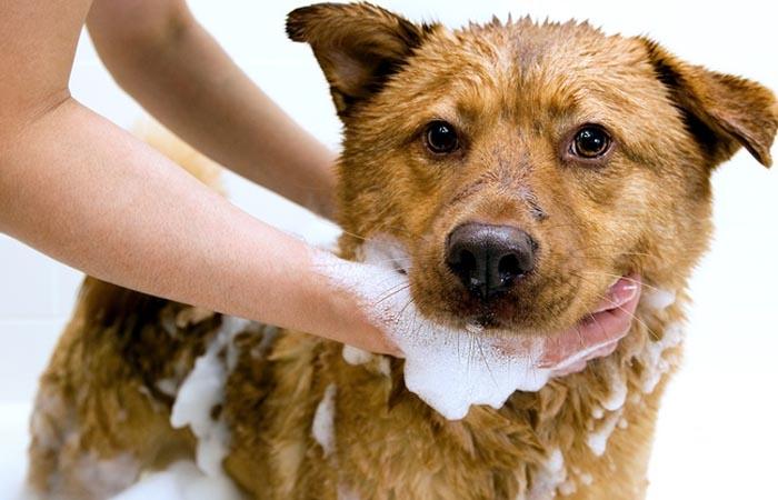 Voucher dịch vụ tắm cho chó 11 đến 20kg chuyên nghiệp 1