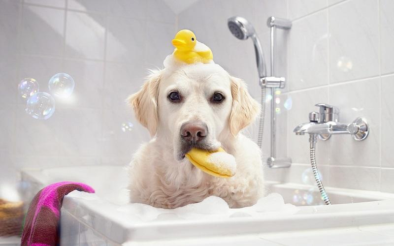 Voucher dịch vụ tắm cắt cho chó 21 đến 30kg 1