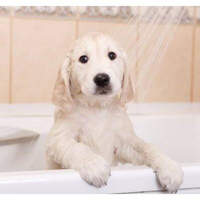 Voucher dịch vụ tắm cắt cho chó trên 30kg 2