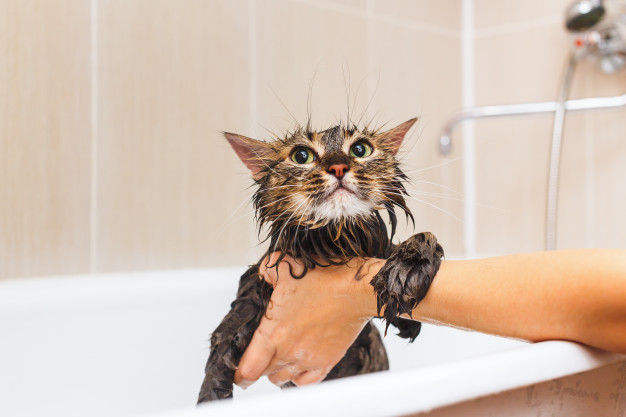 Voucher dịch vụ tắm cho mèo dưới 2kg chuyên nghiệp 3