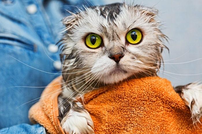 Voucher dịch vụ tắm cho mèo trên 2kg chuẩn spa 3