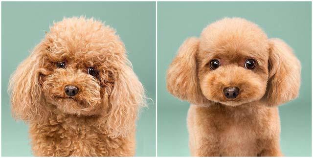 Voucher dịch vụ tắm cắt cạo lông cho chó từ 3kg tới 10kg 2